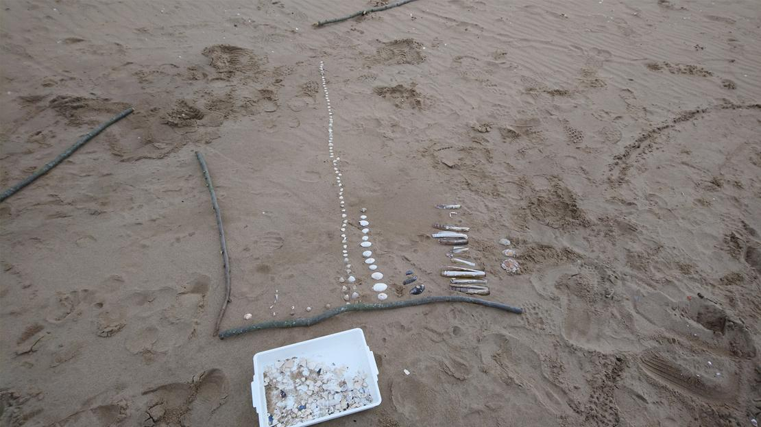 image showing beach with pie charts being made using shells and driftwood