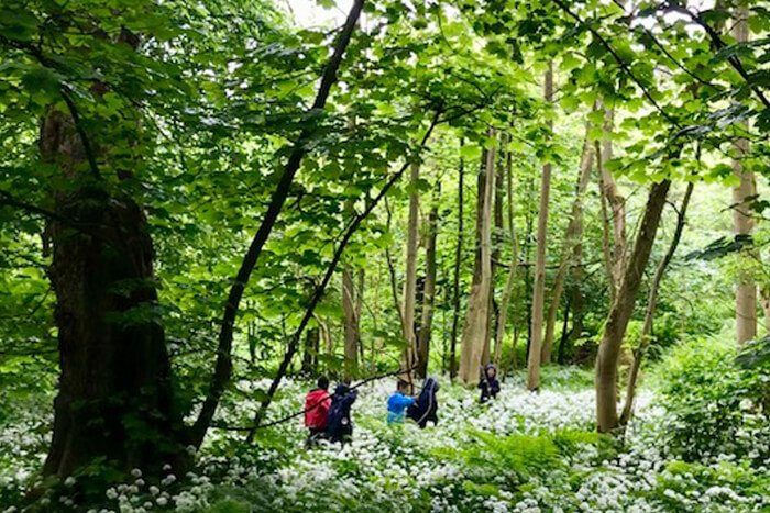 Forest Schools 6